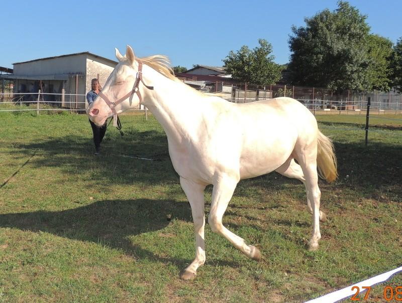 Les chevaux de l'Appaloosa IJ Farm - Page 3 Glitte47