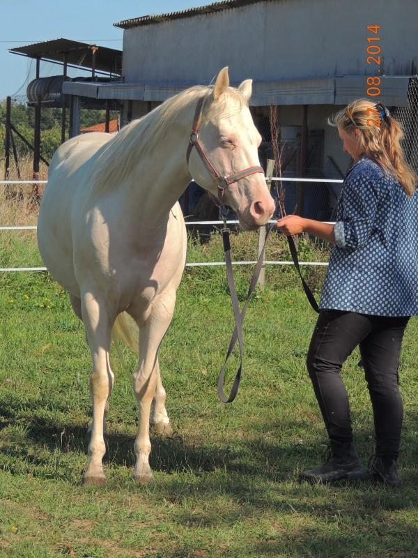 Les chevaux de l'Appaloosa IJ Farm - Page 3 Glitte48