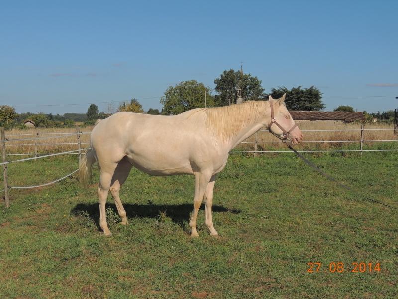 Les chevaux de l'Appaloosa IJ Farm - Page 3 Glitte50