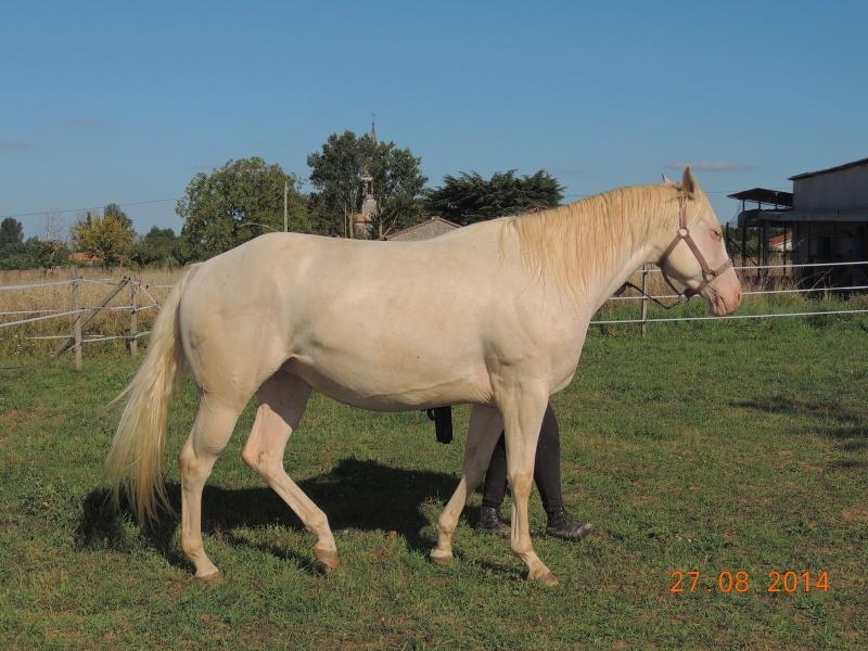 Les chevaux de l'Appaloosa IJ Farm - Page 3 Glitte51