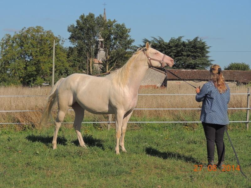 Les chevaux de l'Appaloosa IJ Farm - Page 3 Glitte52