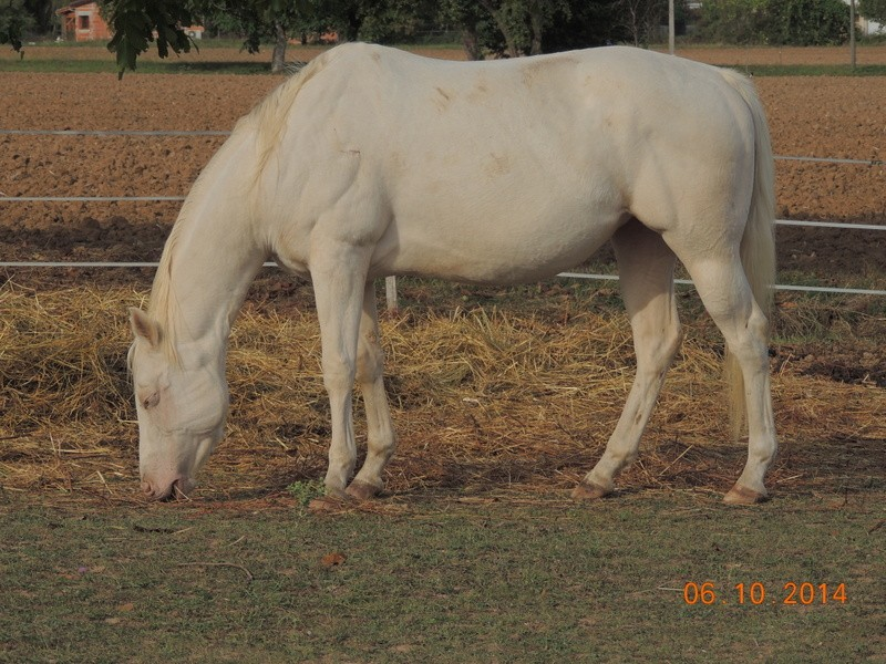 Les chevaux de l'Appaloosa IJ Farm - Page 3 Glitte54