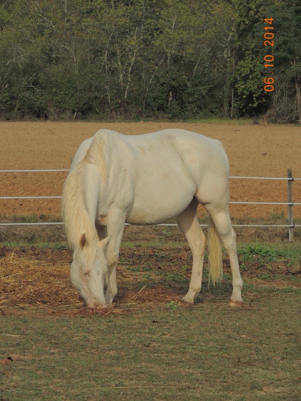 Les chevaux de l'Appaloosa IJ Farm - Page 3 Glitte55