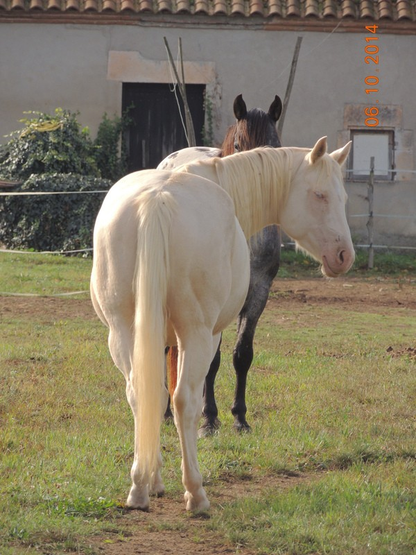 Les chevaux de l'Appaloosa IJ Farm - Page 3 Glitte57