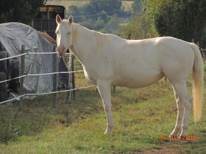 Les chevaux de l'Appaloosa IJ Farm - Page 3 Glitte58