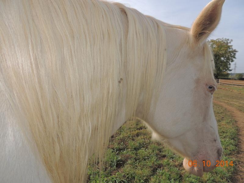 Les chevaux de l'Appaloosa IJ Farm - Page 3 Glitte59