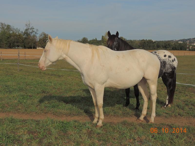 Les chevaux de l'Appaloosa IJ Farm - Page 3 Glitte60