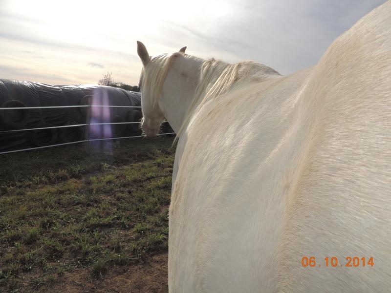 Les chevaux de l'Appaloosa IJ Farm - Page 3 Glitte61
