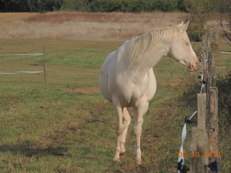 Les chevaux de l'Appaloosa IJ Farm - Page 3 Glitte62