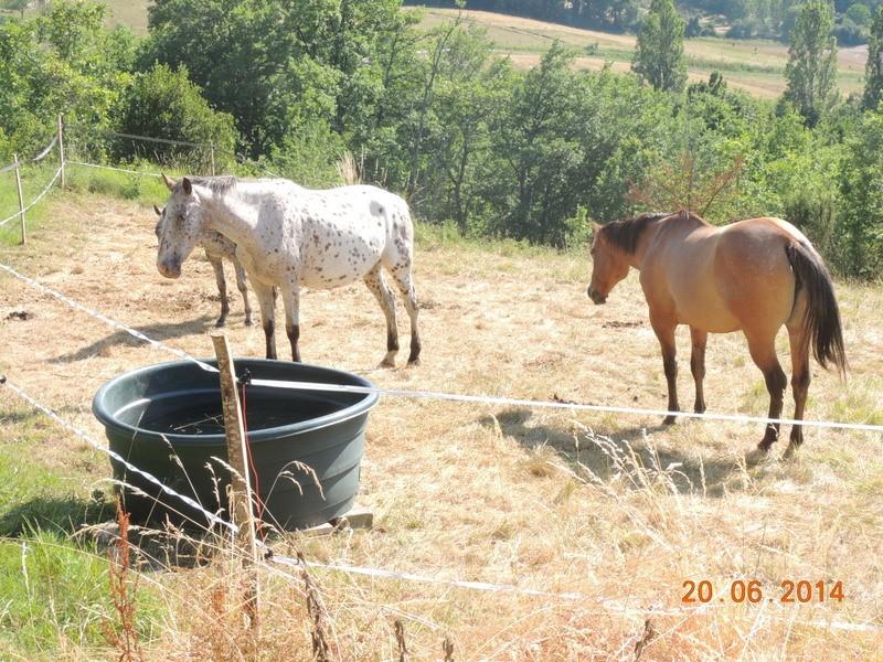 Les chevaux de l'Appaloosa IJ Farm - Page 2 Groupe14