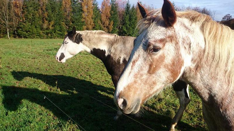 Les chevaux de l'Appaloosa IJ Farm - Page 4 Liz11