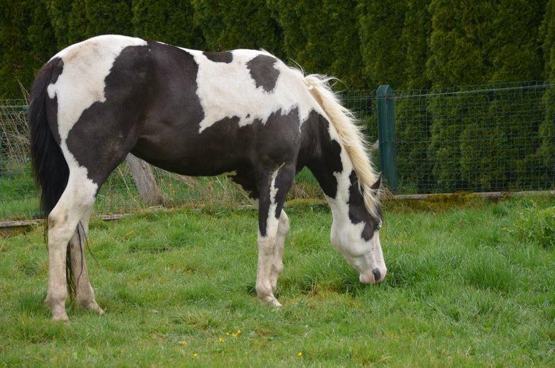 Les chevaux de l'Appaloosa IJ Farm - Page 4 Liz_3310
