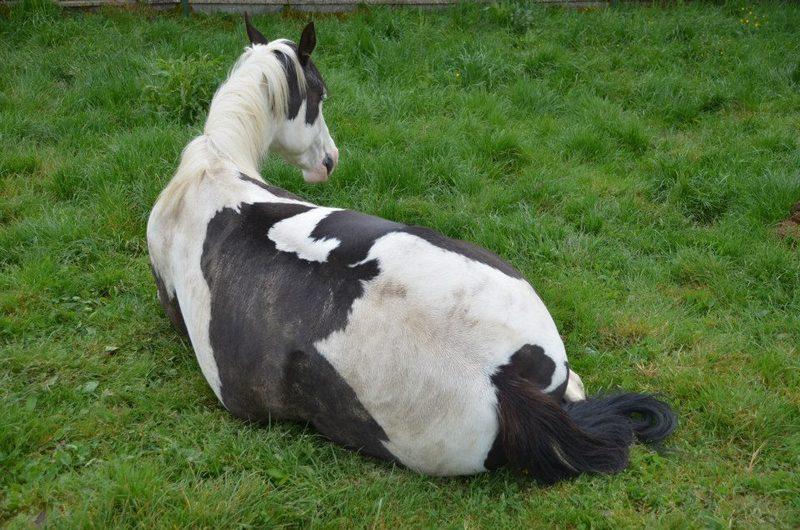Les chevaux de l'Appaloosa IJ Farm - Page 4 Liz_3510