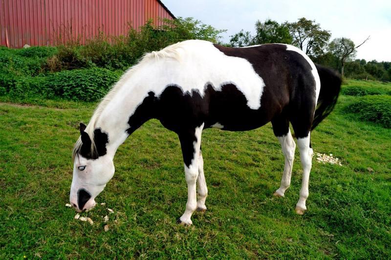 Les chevaux de l'Appaloosa IJ Farm - Page 4 Liz_811