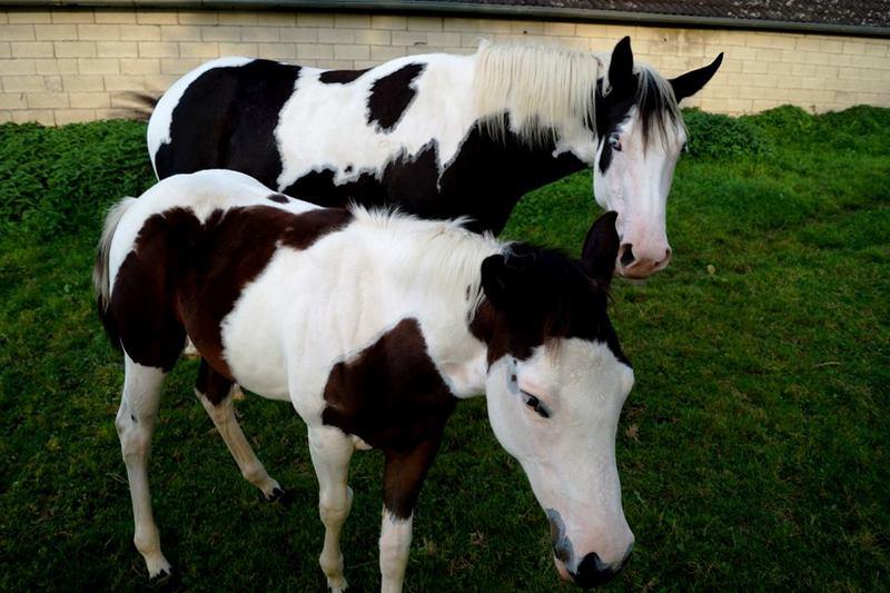 Les chevaux de l'Appaloosa IJ Farm - Page 4 Liz_et13