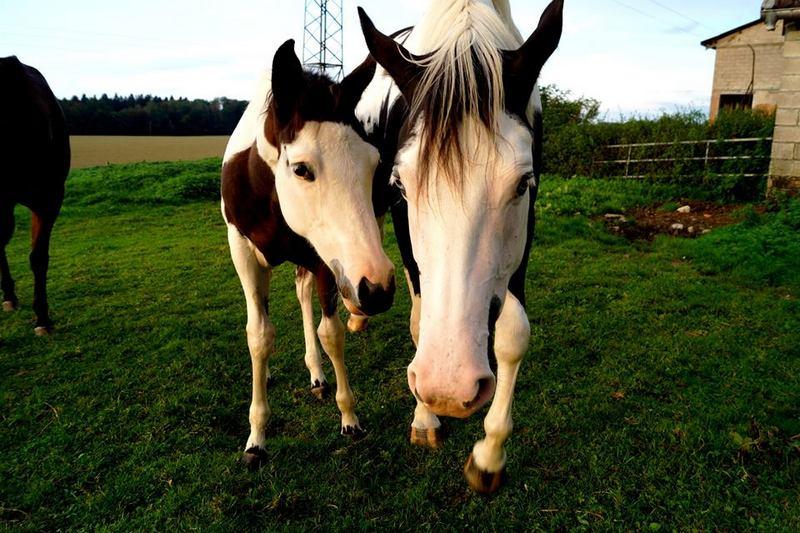 Les chevaux de l'Appaloosa IJ Farm - Page 4 Liz_et14