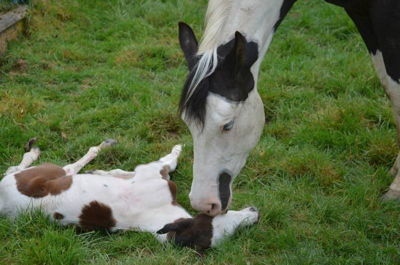 Les chevaux de l'Appaloosa IJ Farm - Page 4 Liz_et15