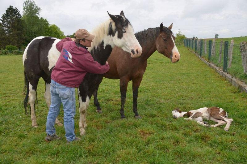 Les chevaux de l'Appaloosa IJ Farm - Page 4 Liz_mi10