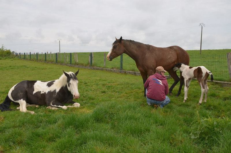 Les chevaux de l'Appaloosa IJ Farm - Page 4 Liz_mi11