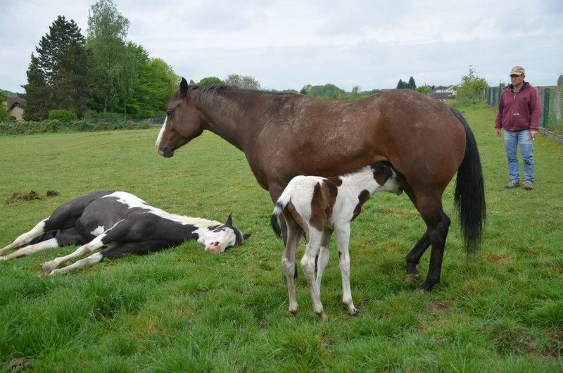 Les chevaux de l'Appaloosa IJ Farm - Page 4 Liz_mi12