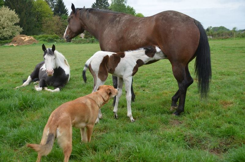 Les chevaux de l'Appaloosa IJ Farm - Page 4 Liz_mi13
