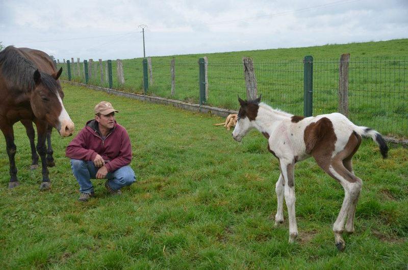 Les chevaux de l'Appaloosa IJ Farm - Page 4 Mist_e12