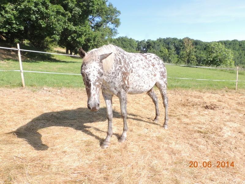 Les chevaux de l'Appaloosa IJ Farm - Page 2 Opium10