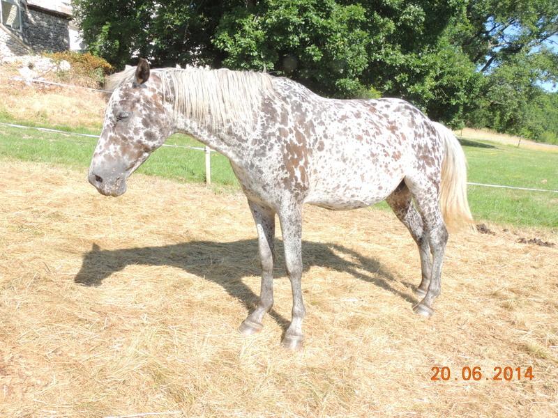 Les chevaux de l'Appaloosa IJ Farm - Page 2 Opium_10