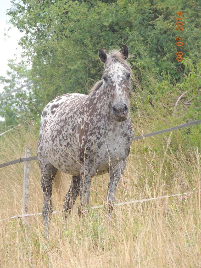 Les chevaux de l'Appaloosa IJ Farm - Page 2 Opium_13