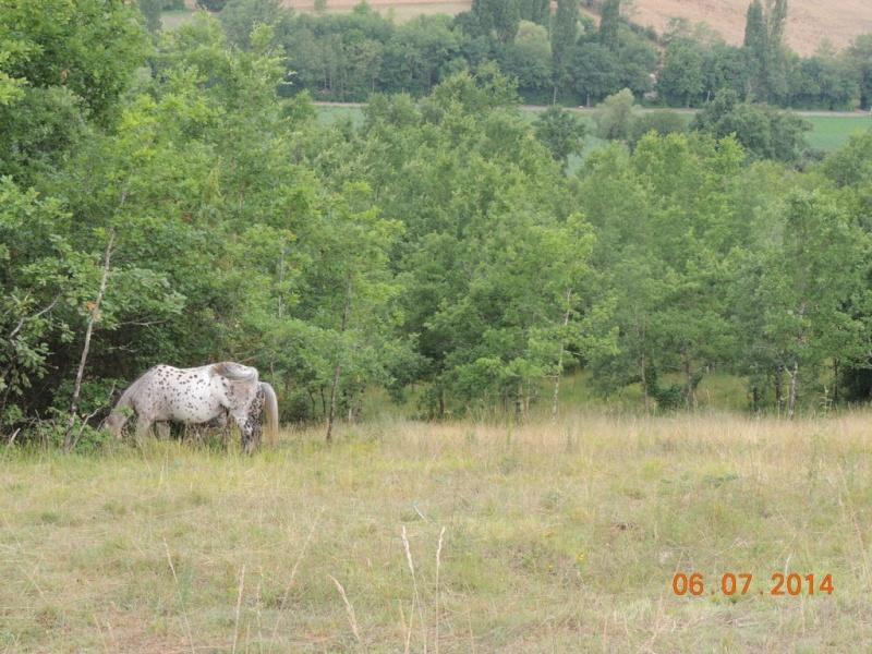 Les chevaux de l'Appaloosa IJ Farm - Page 2 Opium_14