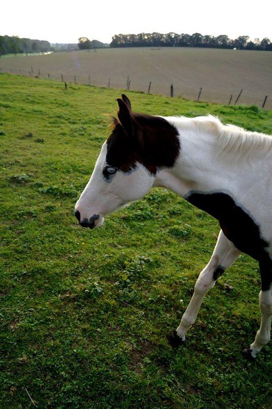 Les chevaux de l'Appaloosa IJ Farm - Page 4 Prince15