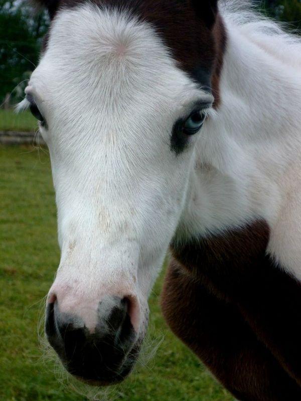 Les chevaux de l'Appaloosa IJ Farm - Page 4 Prince23