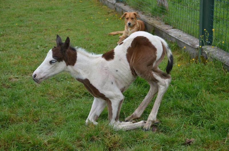 Les chevaux de l'Appaloosa IJ Farm - Page 4 Prince31