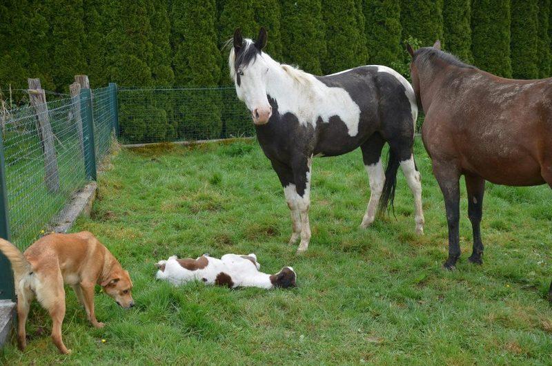 Les chevaux de l'Appaloosa IJ Farm - Page 4 Prince33