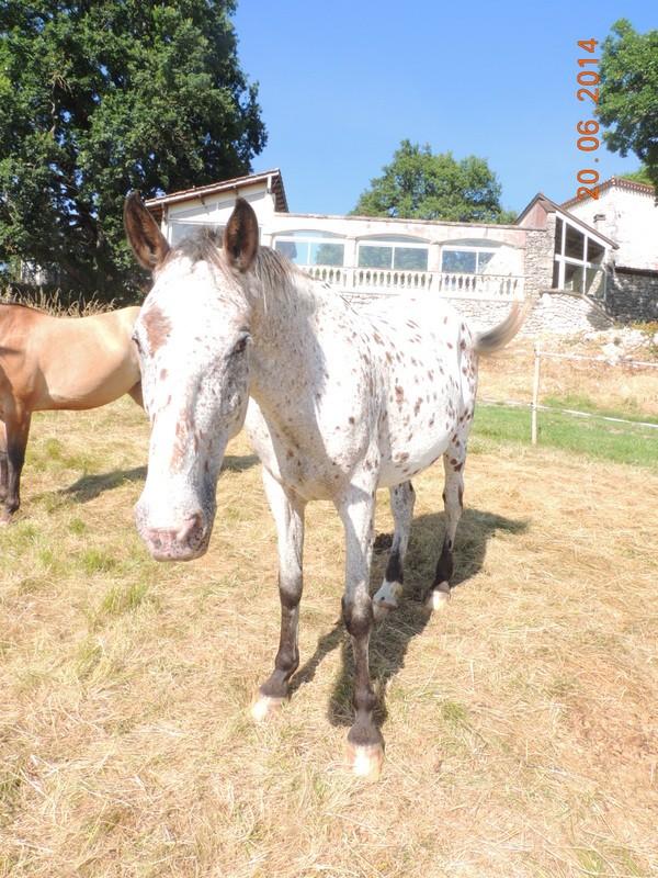 Les chevaux de l'Appaloosa IJ Farm - Page 2 Quarin10