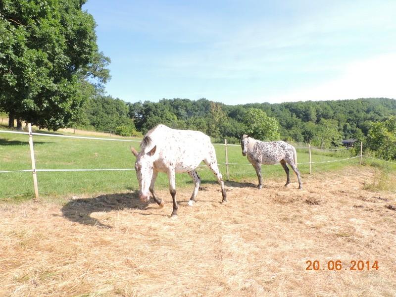 Les chevaux de l'Appaloosa IJ Farm - Page 2 Quarin12