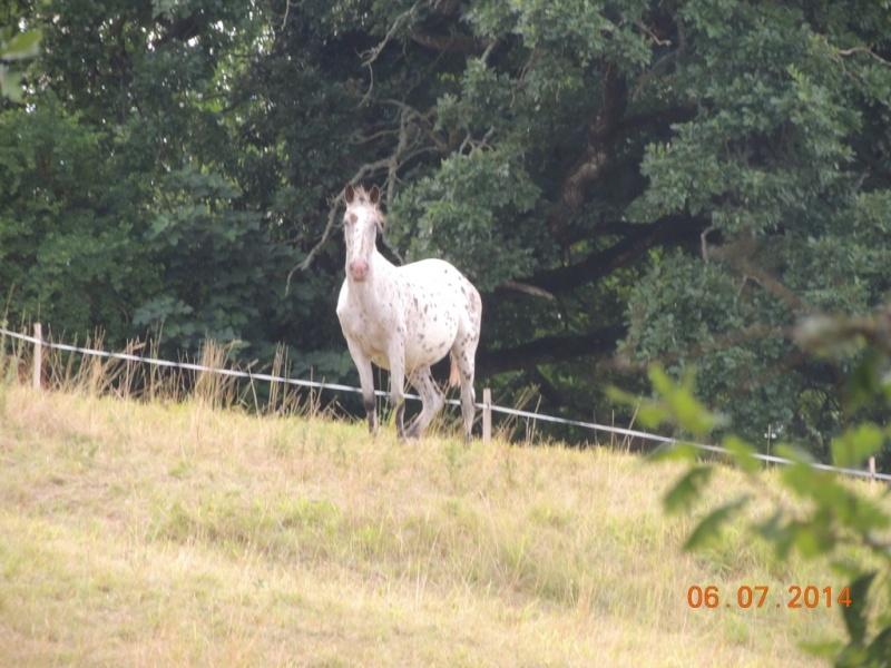 Les chevaux de l'Appaloosa IJ Farm - Page 2 Quarin13