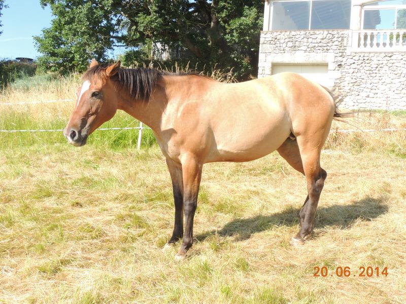 Les chevaux de l'Appaloosa IJ Farm - Page 2 Sun10