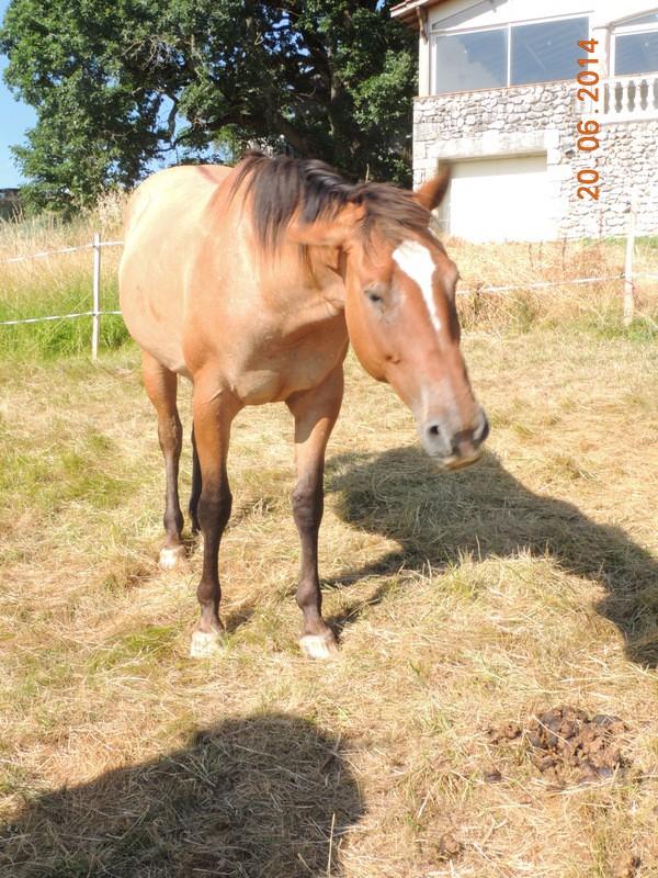Les chevaux de l'Appaloosa IJ Farm - Page 2 Sun_210