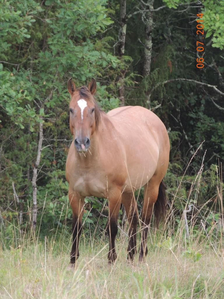 Les chevaux de l'Appaloosa IJ Farm - Page 2 Sun_211