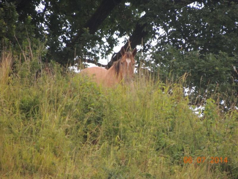Les chevaux de l'Appaloosa IJ Farm - Page 2 Sun_310