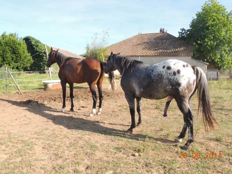 Mes chevaux, un mélange d'un peu tout le monde! - Page 10 Thais_10