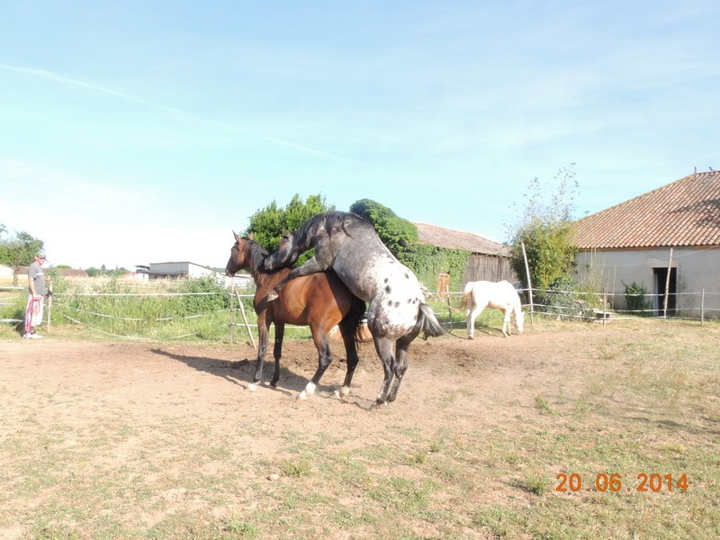 Mes chevaux, un mélange d'un peu tout le monde! - Page 10 Thais_11
