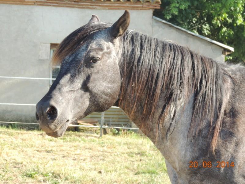 Les chevaux de l'Appaloosa IJ Farm - Page 2 Undy10