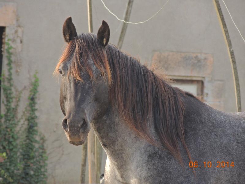 Les chevaux de l'Appaloosa IJ Farm - Page 3 Undy12