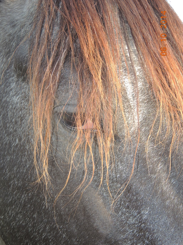 Les chevaux de l'Appaloosa IJ Farm - Page 3 Undy_110