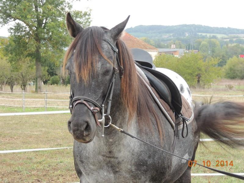 Les chevaux de l'Appaloosa IJ Farm - Page 3 Undy_113