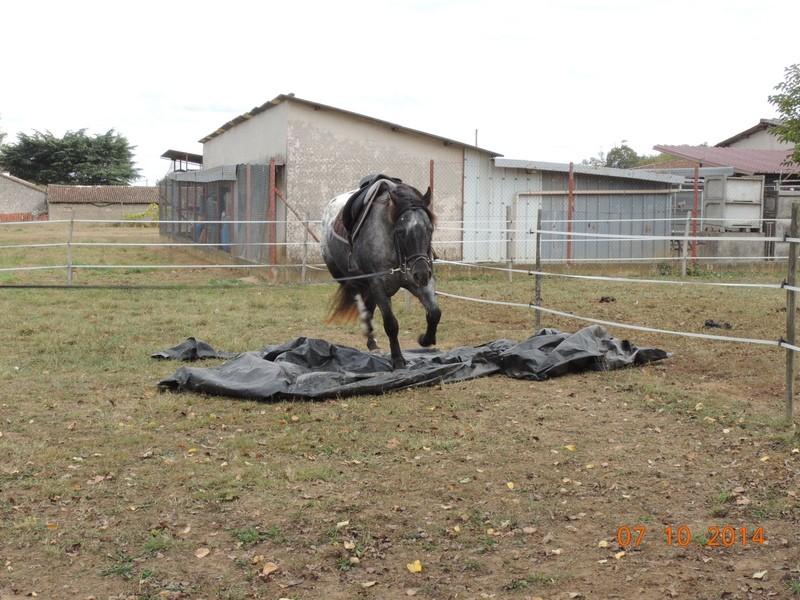 Les chevaux de l'Appaloosa IJ Farm - Page 3 Undy_212