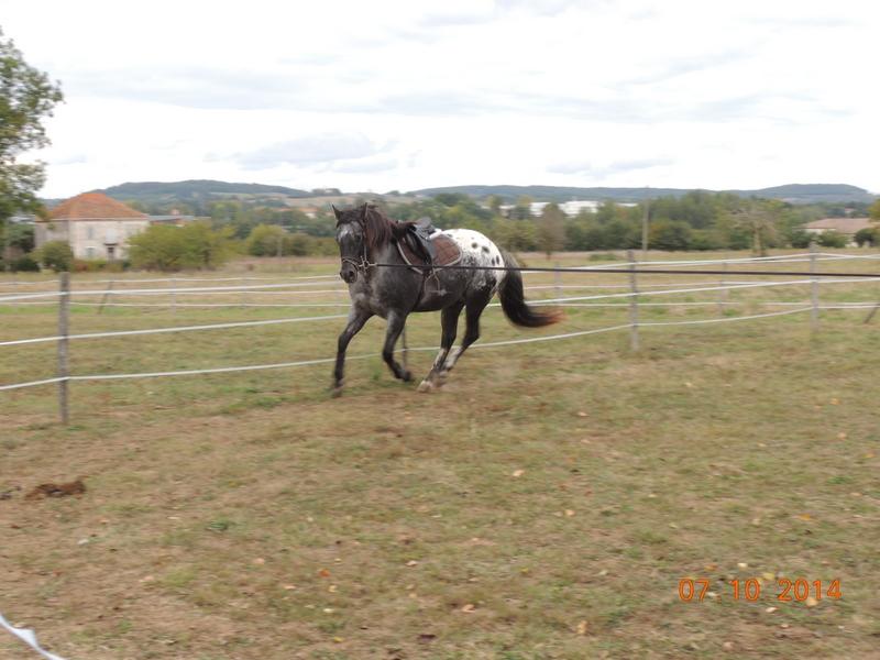 Les chevaux de l'Appaloosa IJ Farm - Page 3 Undy_213