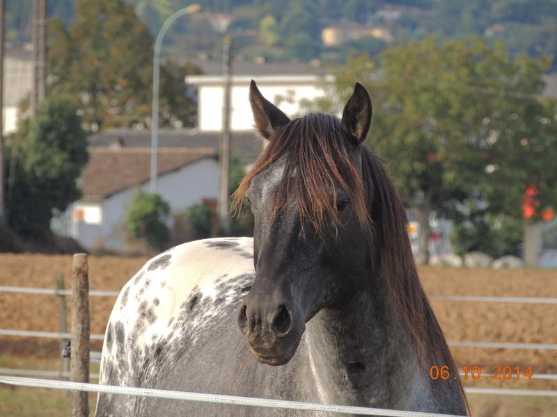 Les chevaux de l'Appaloosa IJ Farm - Page 3 Undy_413